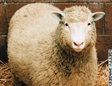 story.sheep.gi.jpg