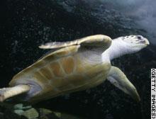 story.turtle.gi.jpg