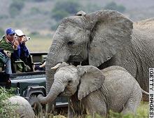 story.safari.gi.jpg