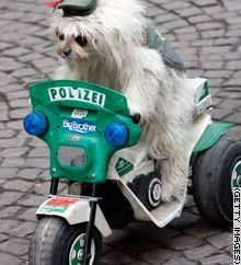 "A dog riding a toy motorcycle takes part in the ""Rose Monday"" street parade in Cologne, Germany."